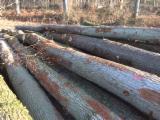 Laubrundholz  Eiche - Schnittholzstämme, Eiche