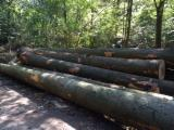 Hardwood Logs For Sale - Register And Contact Companies - Beech Logs