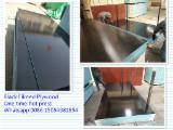 Poplar Core 18 mm Black Film Faced Marine Plywood For Construction