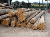 Hardwood Logs Suppliers and Buyers - Teak Logs 25+ cm