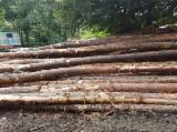 Softwood  Logs For Sale - Pine  - Scots Pine 24-40 cm AB Saw Logs Romania
