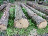Hardwood Logs - European Oak Logs 40 cm