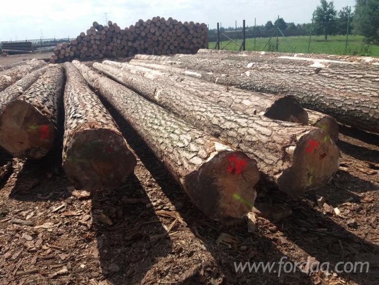 Pine-FSC-Logs-25-50