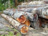 Find best timber supplies on Fordaq - Chang Wei Wood Flooring Enterprise Co., Ltd. - Need Rode Locus Logs
