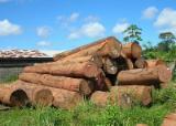 Find best timber supplies on Fordaq - Chang Wei Wood Flooring Enterprise Co., Ltd. - Basralocus Logs 60 cm