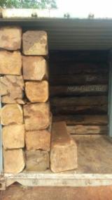 Kosso Wood Hardwood Logs - Kosso / Doussie / Tali / Musivi / Bubinga Square Logs