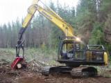 Hong Kong Softwood Logs - Radiata Pine Construction Grade Logs