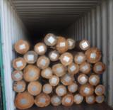 Hardwood  Logs For Sale - Eucalyptus Grandis Plantation Logs, diameter 18-25 cm