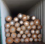 Feuillus  Grumes À Vendre - Vend Grumes De Sciage Eucalyptus FSC