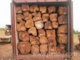 Drewno Liściaste Tarcica – Drewno Budowlane – Tarcica Strugana Wymagania - Krawędziaki, Doussie , Kosso
