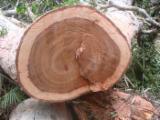 Drewno Liściaste Kłody Wymagania - Kłody Tartaczne, Bubinga