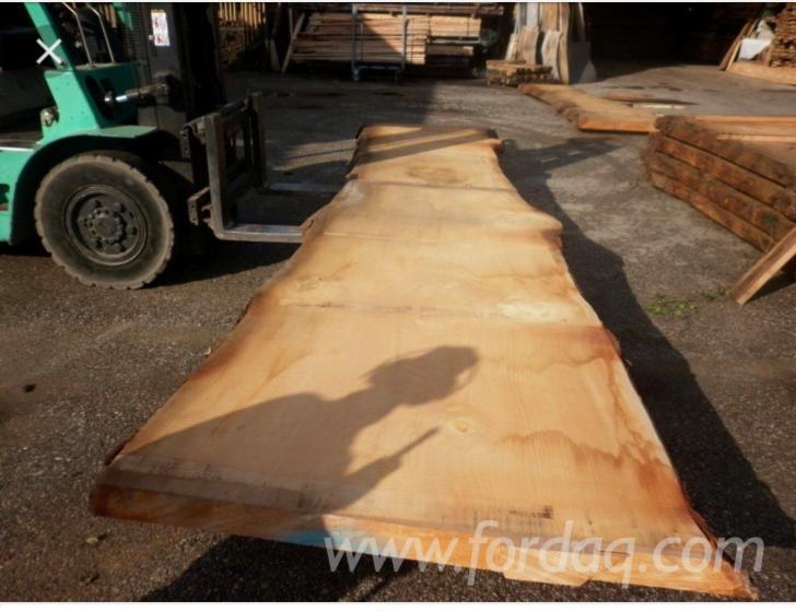 Vindem-Cherestea-Netivit%C4%83-bulzi-Northern-White-Cedar-100-mm