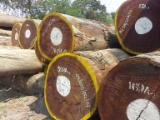 Hardwood  Logs For Sale - Tiama Saw Logs for Sale, A/B, diameter 70+ cm