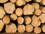 Softwood Logs for sale. Wholesale Softwood Logs exporters - Cypress Logs for Sale, diameter 25+ cm