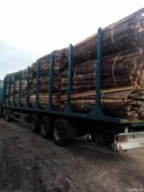 Firewood, Pellets And Residues Off-Cuts Edgings - Pine Off-Cuts