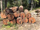 Hardwood  Logs For Sale - North American Red Oak Logs, Fresh Cut