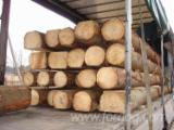 Ucrania Suministros - Venta Pino Silvestre  - Madera Roja, Abeto  - Madera Blanca 140 - 300 mm