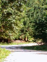 Cumparatori Terenuri Forestiere - Cumparam Padure | Parc De Vanatoare