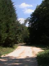 Cumparatori Terenuri Forestiere - Cumpar Padure Fag Minim 200 ha