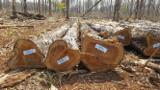 United Arab Emirates Hardwood Logs - Teak Logs from Brazil, diameter 25 cm