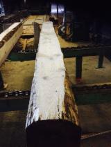France Softwood Logs - Unedged Maritime Pine/Pine/Spruce Saw Logs, 25+ cm Diameter