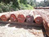 硬木原木待售 - 注册及联络公司 - 锯材级原木