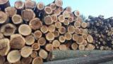 Hardwood Logs Suppliers and Buyers - FSC 24+ cm Poplar, I214 clone Veneer Logs from Romania, Macin, Tulcea