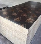 Plywood Panels  - Black Film Faced Plywood made of high quality Rubber Wood