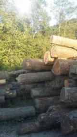 Softwood Logs Suppliers and Buyers - Douglas Fir  15-35 cm AB Saw Logs Romania