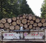 null - Hrast Drva Za Potpalu/Oblice Cepane Rumunija