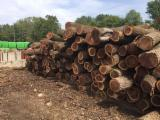Forest And Logs - Black Walnut Logs 9 - 12 inches