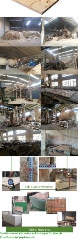 CE Engineered Panels for sale. Wholesale exporters - 12 mm Poplar OSB