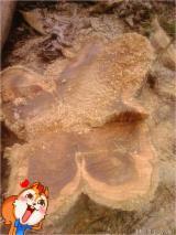 Grumes Feuillus Teak - Vend Grumes De Sciage Teak ISO-14001 Brong Ahafo