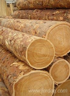 Larch-Veneer-Logs-40-