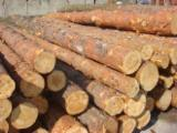 Larch   Softwood Logs - Larch Logs 35+ cm