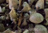 Malaysia - Fordaq Online market - Palm Kernel Shell