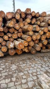 null - Teak Logs 25+ cm