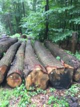 Find best timber supplies on Fordaq - Chang Wei Wood Flooring Enterprise Co., Ltd. - Looking for White Oak Logs Suppliers
