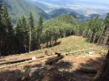 Servicii Forestiere de vanzare - ofer servicii scos-apropiat cu funicular wissen v30 pe o distanta de pana la 1300m cu sarcina de2-4mc.productivitate 700mc/luna,montam pentru min 1000mc