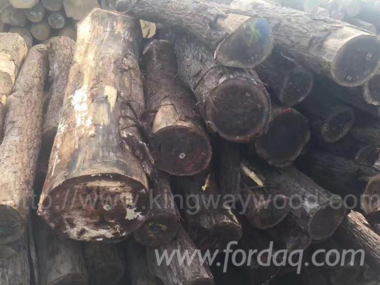 Black-Walnut-Logs