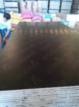 Buy or Sell Film Faced Plywood - Eucalyptus Core Black Film Faced Plywood