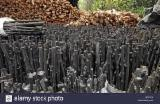 Firewood, Pellets And Residues Africa - High Quality Chestnut Charcoal
