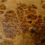 Bulgaria - Fordaq Online market - We Need Beech/ Elm/ Oak Logs