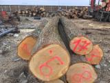 Germany Hardwood Logs - Tilia/ Basswood Logs
