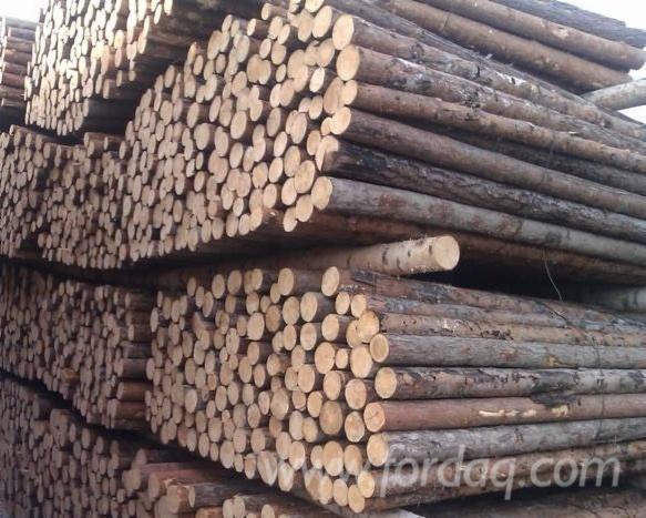 Scots-Pine-Industrial-Logs