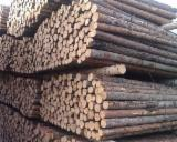 Scots Pine Industrial Logs, 8+ cm Diameter