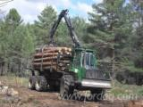 Softwood  Logs For Sale - Radiata Pine Construction Logs