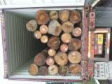 Nadelrundholz Zu Verkaufen - Schnittholzstämme, Southern Yellow Pine