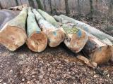 Cameroon Supplies - Beech Saw Logs 40+ cm