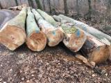 Wälder Und Rundholz Afrika - Schnittholzstämme, Buche